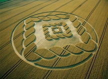 30-South-Field-Alton-Barnes-Wiltshire-Wheat-22-07-02-OH-MFA3