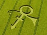 crop circles (225)