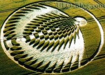 crop circles (280)