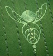 crop circles (53)